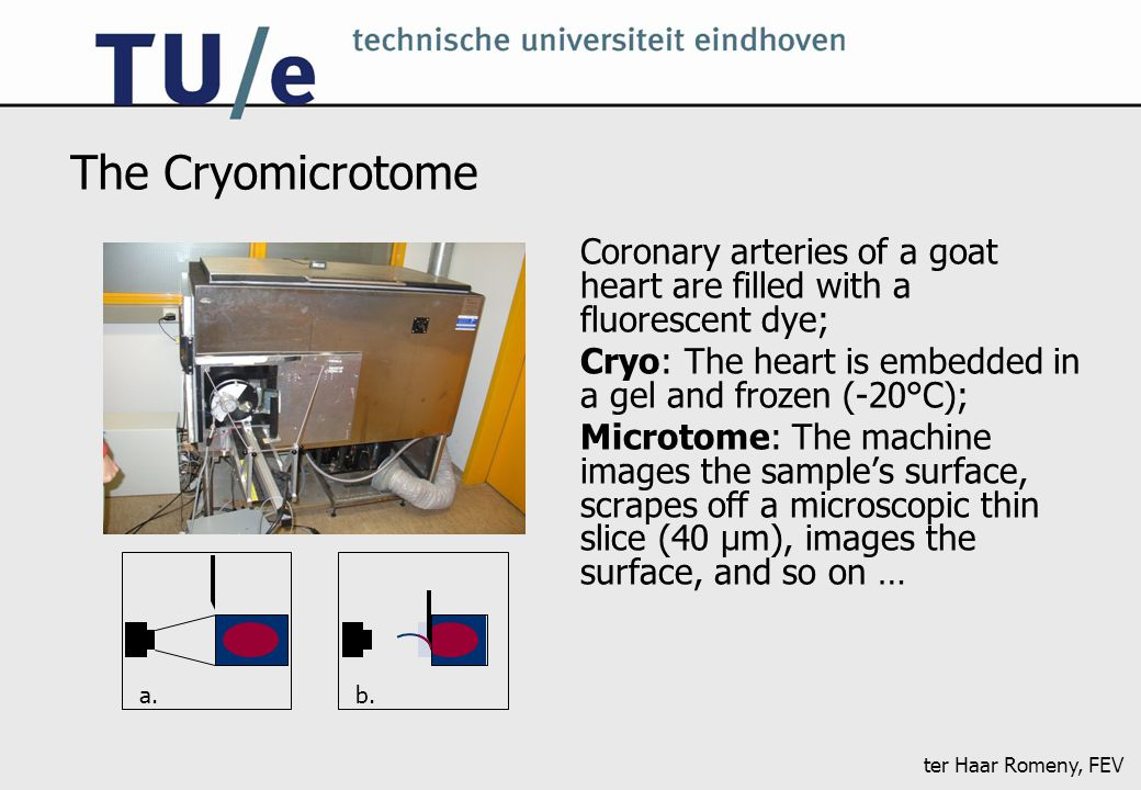 ter Haar Romeny, FEV The Cryomicrotome Coronary arteries of a goat heart are filled with a fluorescent dye; Cryo: The heart is embedded in a gel and frozen (-20°C); Microtome: The machine images the sample's surface, scrapes off a microscopic thin slice (40 μm), images the surface, and so on … a.b.