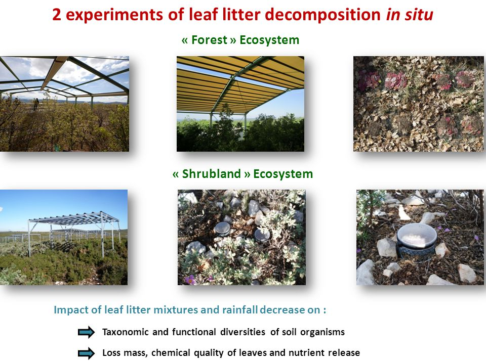 Impact of leaf litter mixtures and rainfall decrease on : Taxonomic and functional diversities of soil organisms Loss mass, chemical quality of leaves and nutrient release « Forest » Ecosystem « Shrubland » Ecosystem 2 experiments of leaf litter decomposition in situ