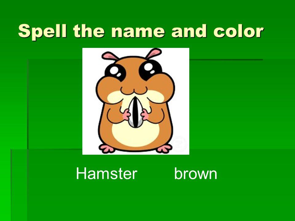 Hamster brown