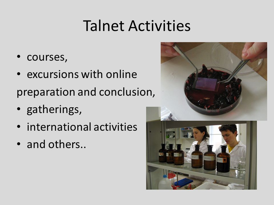 Talnet Activities courses, excursions with online preparation and conclusion, gatherings, international activities and others..