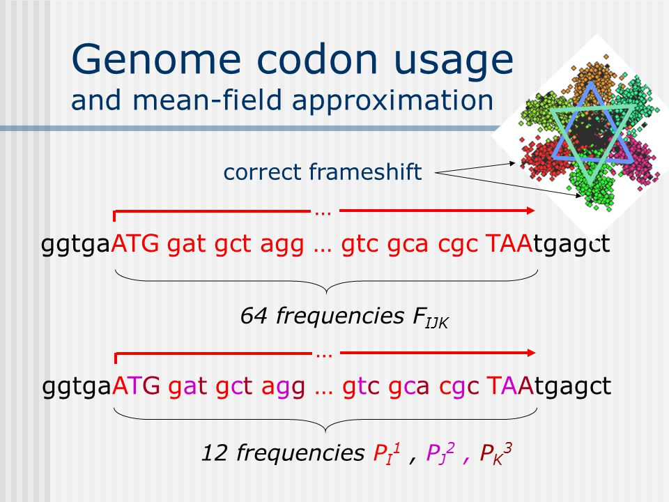 Genome codon usage and mean-field approximation ggtgaATG gat gct agg … gtc gca cgc TAAtgagct … correct frameshift 64 frequencies F IJK … ggtgaATG gat gct agg … gtc gca cgc TAAtgagct 12 frequencies P I 1, P J 2, P K 3