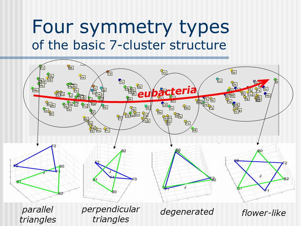 Four symmetry types of the basic 7-cluster structure eubacteria flower-like degenerated perpendicular triangles parallel triangles
