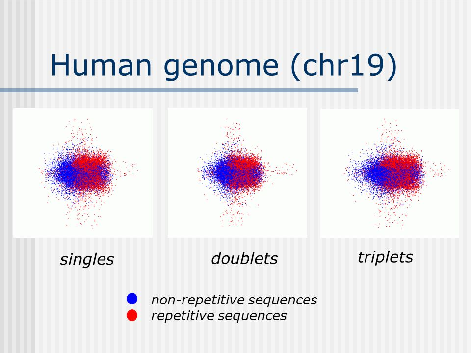 Human genome (chr19) non-repetitive sequences repetitive sequences singles doublets triplets