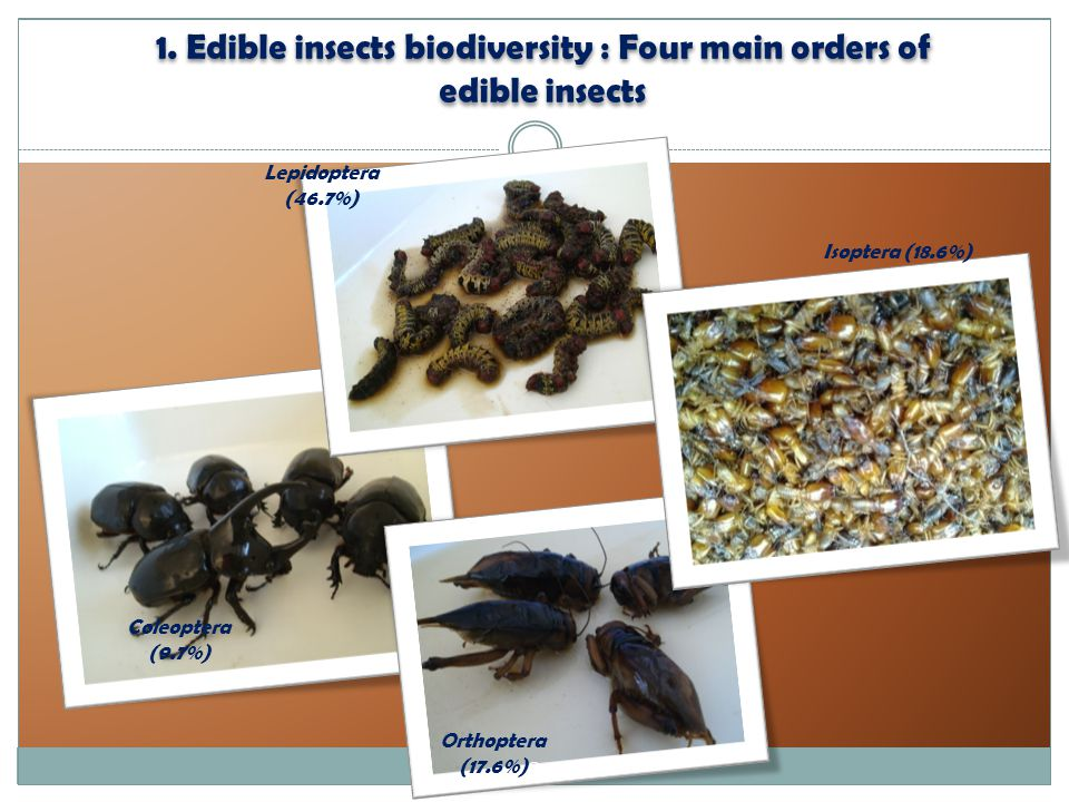 1. Edible insects biodiversity : Four main orders of edible insects Orthoptera (17.6%) Coleoptera (9.7%) Lepidoptera (46.7%) Isoptera (18.6%) 2