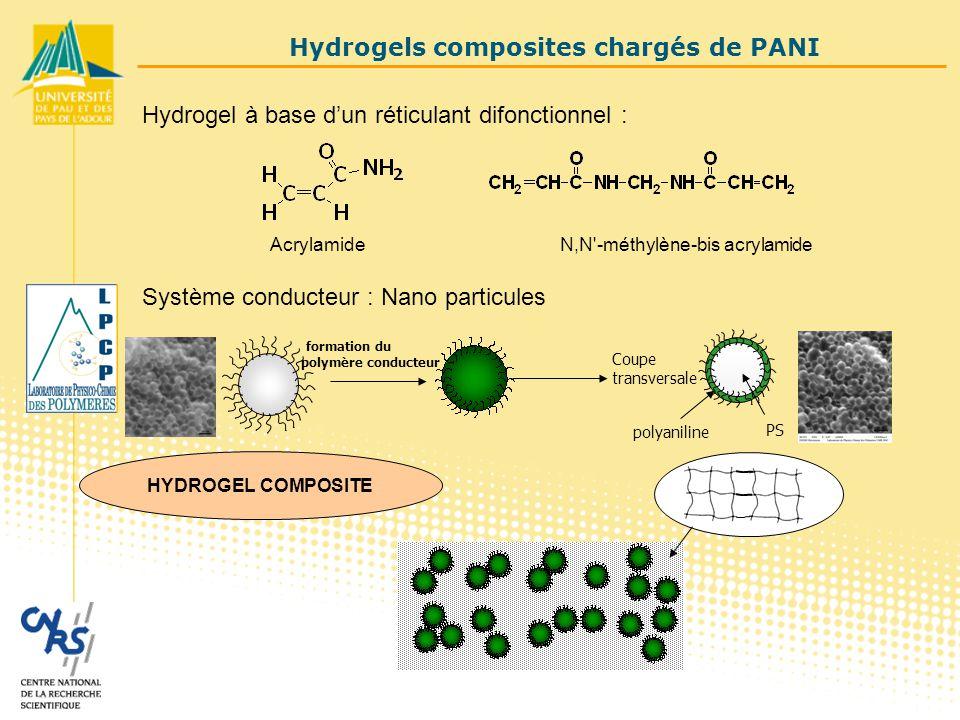 Hydrogel à base d'un réticulant difonctionnel : AcrylamideN,N -méthylène-bis acrylamide HYDROGEL COMPOSITE Système conducteur : Nano particules polyaniline PS Coupe transversale Hydrogels composites chargés de PANI formation du polymère conducteur
