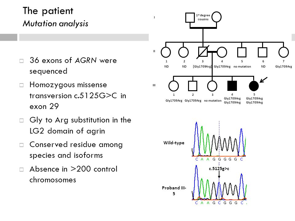 c.5125g>c Wild-type Proband III- 5 The patient Mutation analysis  36 exons of AGRN were sequenced  Homozygous missense transversion c.5125G>C in exon 29  Gly to Arg substitution in the LG2 domain of agrin  Conserved residue among species and isoforms  Absence in >200 control chromosomes 7 Gly1709Arg I II 1 st degree cousins 5 Gly1709Arg 4 Gly1709Arg 3 no mutation 1 Gly1709Arg 2 Gly1709Arg 5 no mutation 3 [Gly1709Arg] 4 Gly1709Arg 6 ND 1 ND 2 ND III