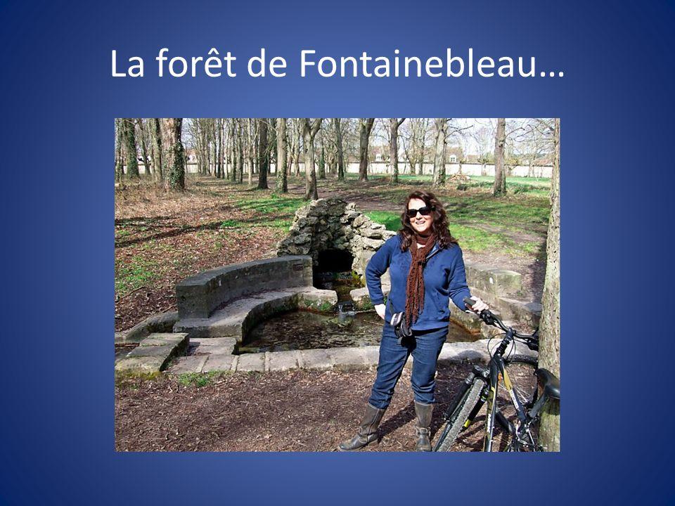 La forêt de Fontainebleau…