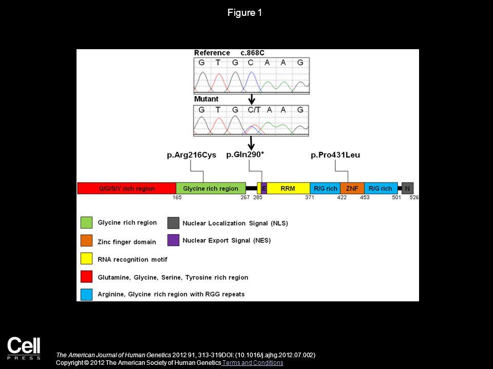 Figure 2 The American Journal of Human Genetics 2012 91, 313-319DOI: (10.1016/j.ajhg.2012.07.002) Copyright © 2012 The American Society of Human Genetics Terms and Conditions Terms and Conditions