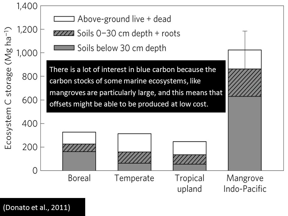 (Donato et al., 2011) There is a lot of interest in blue carbon because the carbon stocks of some marine ecosystems, like mangroves are particularly large, and this means that offsets might be able to be produced at low cost.