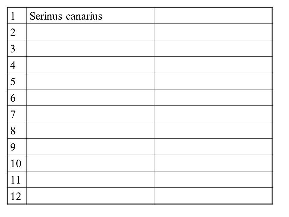 1Serinus canarius 2 3 4 5 6 7 8 9 10 11 12
