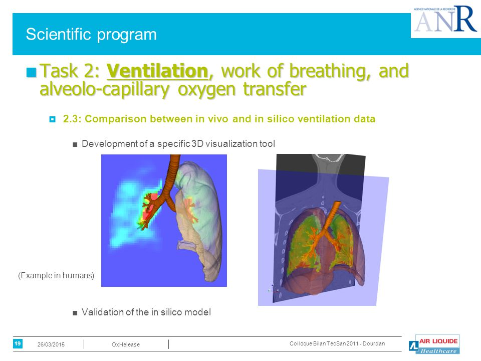 19 OxHelease26/03/2015 Colloque Bilan TecSan 2011 - Dourdan Scientific program ■ Task 2: Ventilation, work of breathing, and alveolo-capillary oxygen transfer  2.3: Comparison between in vivo and in silico ventilation data ■Development of a specific 3D visualization tool ■Validation of the in silico model (Example in humans)