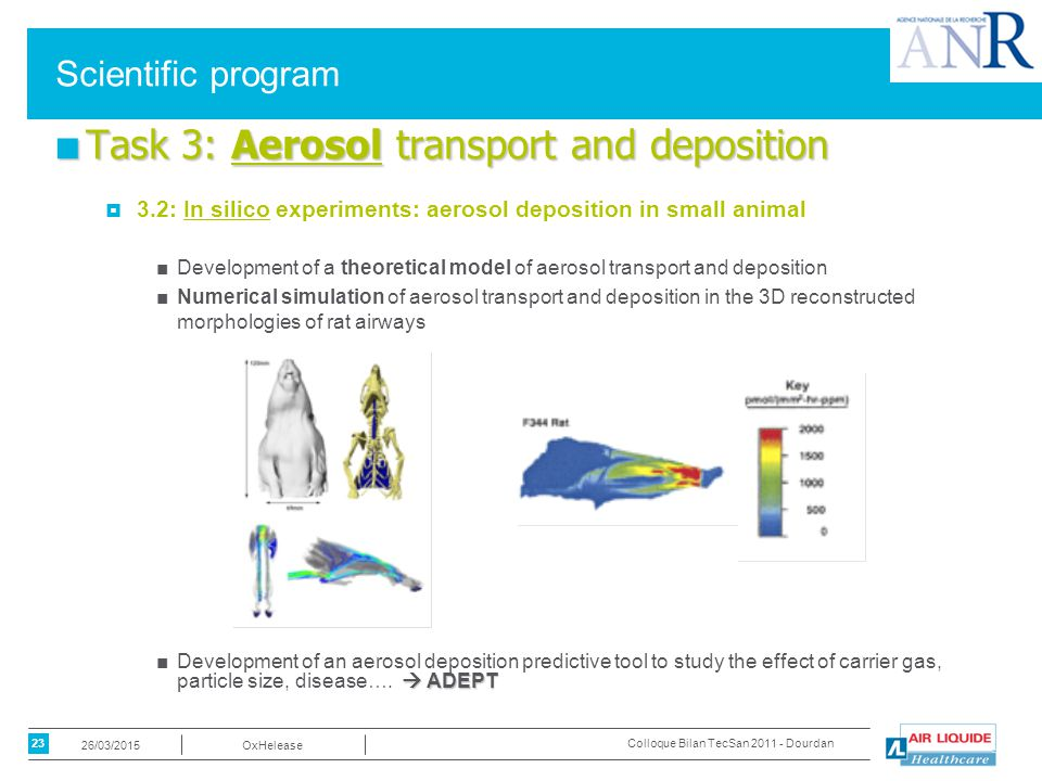 23 OxHelease26/03/2015 Colloque Bilan TecSan 2011 - Dourdan Scientific program ■ Task 3: Aerosol transport and deposition  3.2: In silico experiments: aerosol deposition in small animal ■Development of a theoretical model of aerosol transport and deposition ■Numerical simulation of aerosol transport and deposition in the 3D reconstructed morphologies of rat airways  ADEPT ■Development of an aerosol deposition predictive tool to study the effect of carrier gas, particle size, disease….
