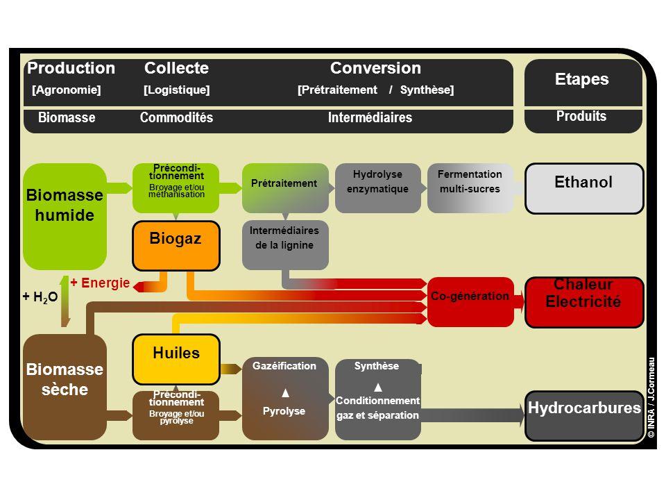 A L I M E N T A T I O N A G R I C U L T U R E E N V I R O N N E M E N T [Agronomie][Prétraitement / Synthèse][Logistique] Etapes ProductionConversionCollecte Commodités Produits BiomasseIntermédiaires Biomasse sèche Hydrocarbures Précondi- tionnement Broyage et/ou pyrolyse Synthèse Conditionnement gaz et séparation Gazéification + Energie Chaleur Electricité Co-génération Huiles Pyrolyse + H 2 O Biomasse humide Ethanol Intermédiaires de la lignine Fermentation multi-sucres Précondi- tionnement Broyage et/ou méthanisation Biogaz Prétraitement Hydrolyse enzymatique © INRA / J.Cormeau