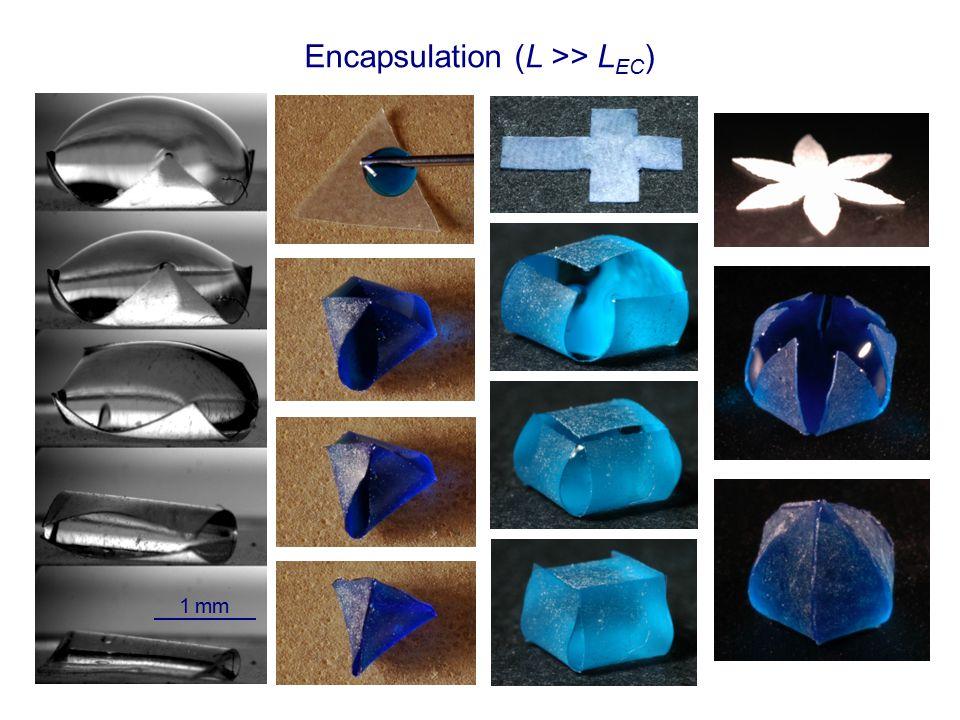 Encapsulation (L >> L EC ) 1 mm
