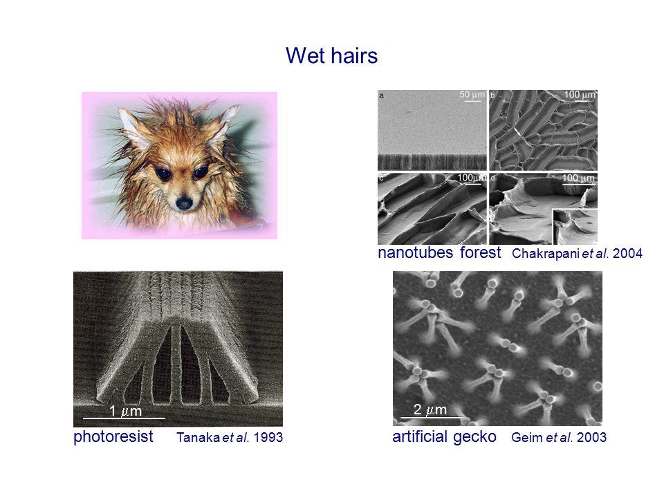 Wet hairs nanotubes forest Chakrapani et al. 2004 artificial gecko 1  m 2  m photoresist Geim et al. 2003Tanaka et al. 1993