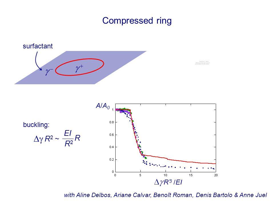 Compressed ring with Aline Delbos, Ariane Calvar, Benoît Roman, Denis Bartolo & Anne Juel surfactant   A/A0A/A0   R` /EI 3 1 cm  R 2 ~ EI R R2R2 buckling: