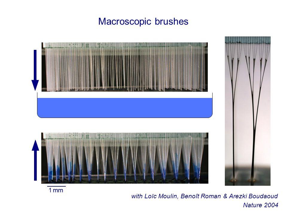 Macroscopic brushes 1 mm with Loïc Moulin, Benoît Roman & Arezki Boudaoud Nature 2004