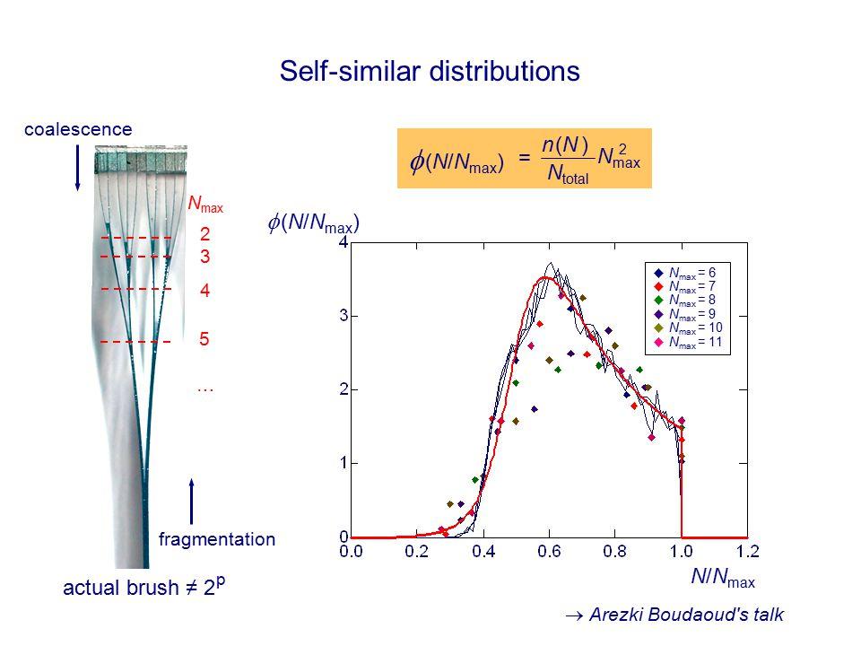 Self-similar distributions N/N max   (N/N max ) N max 2   (N/N max ) n (N )n (N ) N total = 2 3 4 5 … N max  N max = 6  N max = 7  N max = 8  N max = 9  N max = 10  N max = 11 fragmentation coalescence actual brush ≠ 2 p  Arezki Boudaoud s talk