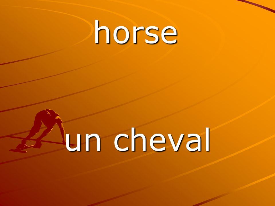 un cheval horse