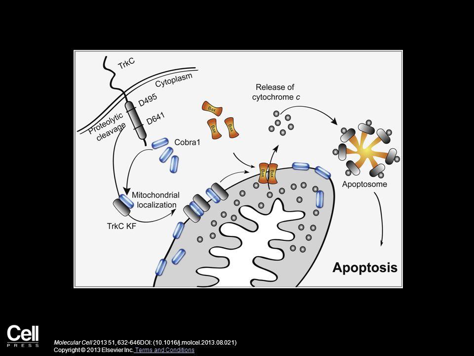 Molecular Cell 2013 51, 632-646DOI: (10.1016/j.molcel.2013.08.021) Copyright © 2013 Elsevier Inc.