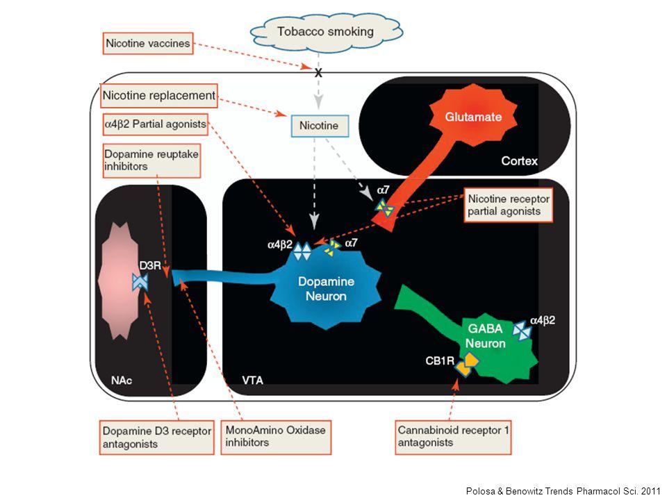 Polosa & Benowitz Trends Pharmacol Sci. 2011