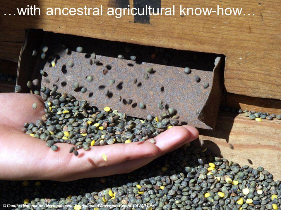 …with ancestral agricultural know-how… © Comité Régional de Développement Touristique d Auvergne Gérard CAVAILLES