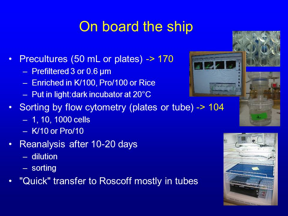 On board the ship Precultures (50 mL or plates) -> 170 –Prefiltered 3 or 0.6 µm –Enriched in K/100, Pro/100 or Rice –Put in light:dark incubator at 20