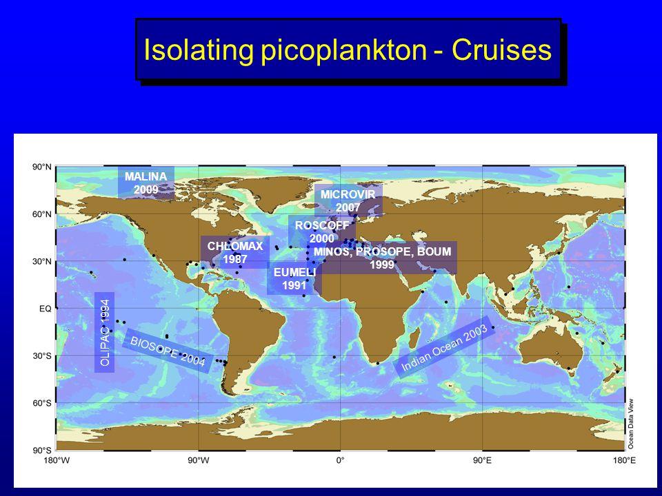 Isolating picoplankton - Cruises BIOSOPE 2004 OLIPAC 1994 MINOS, PROSOPE, BOUM 1999 Indian Ocean 2003 EUMELI 1991 CHLOMAX 1987 ROSCOFF 2000 MICROVIR 2007 MALINA 2009