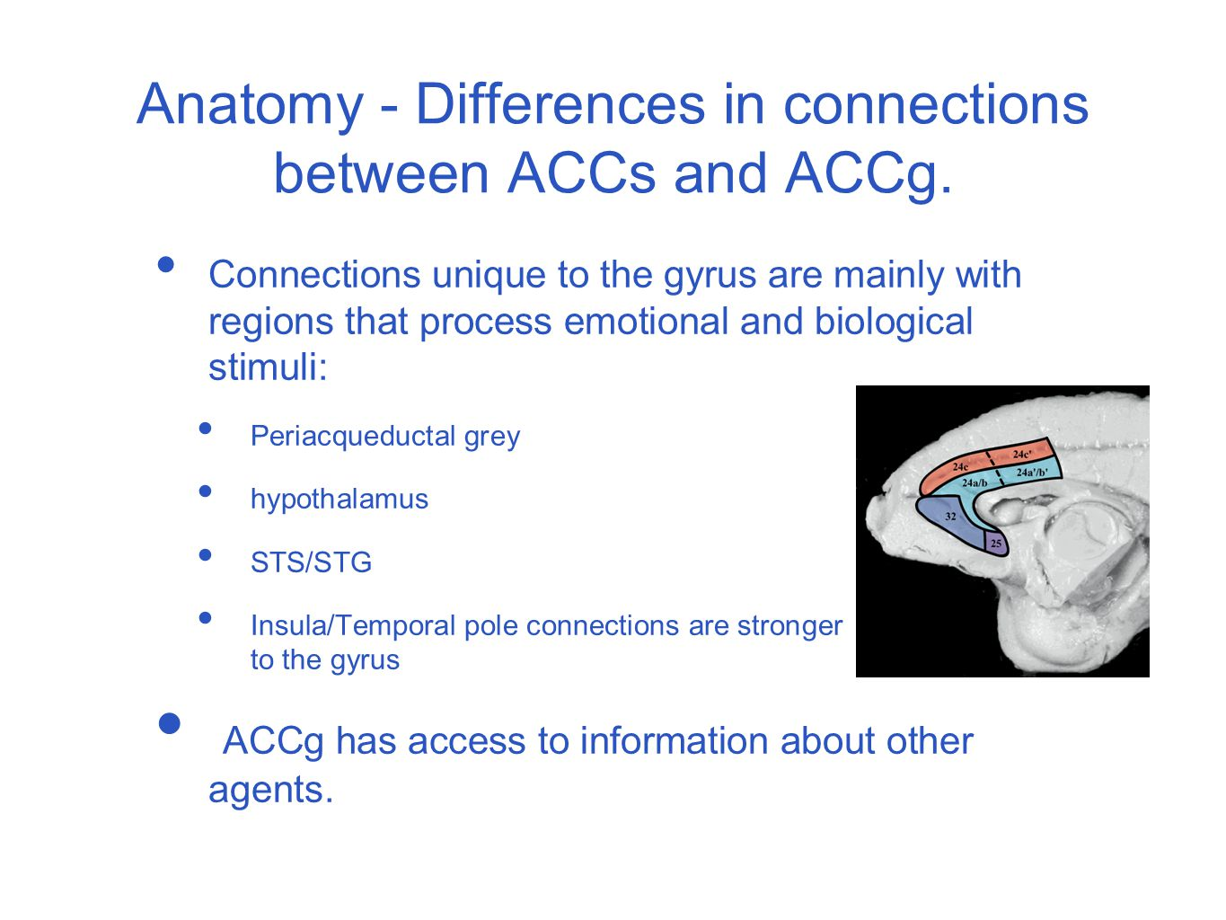 Anatomy - shared connections between ACCs and ACCg.