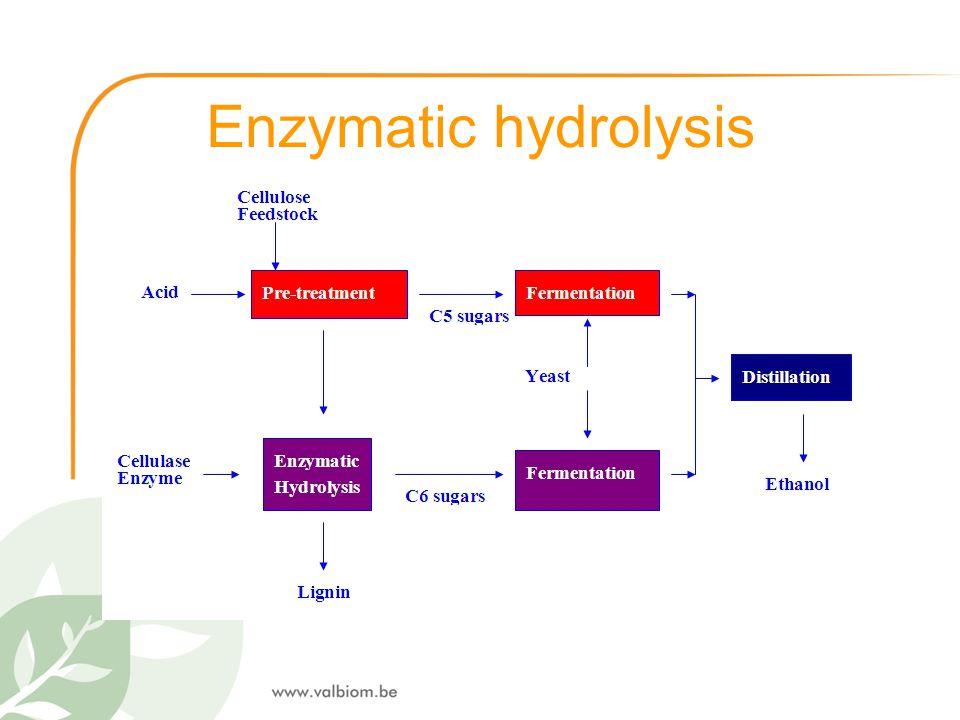 Enzymatic hydrolysis