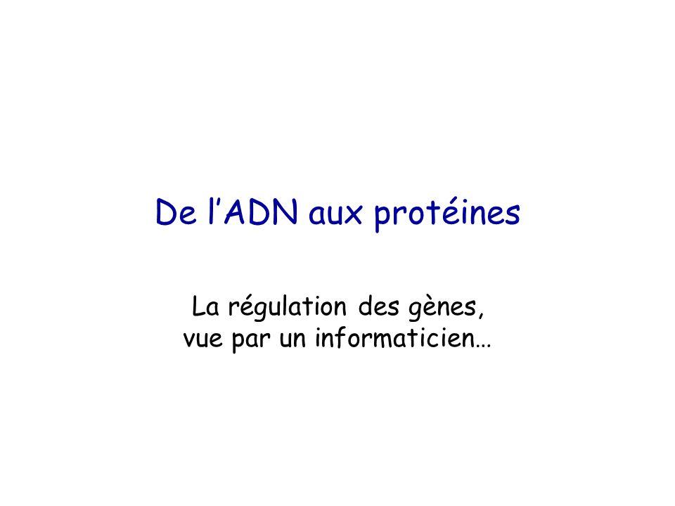 De l'ADN aux protéines La régulation des gènes, vue par un informaticien…