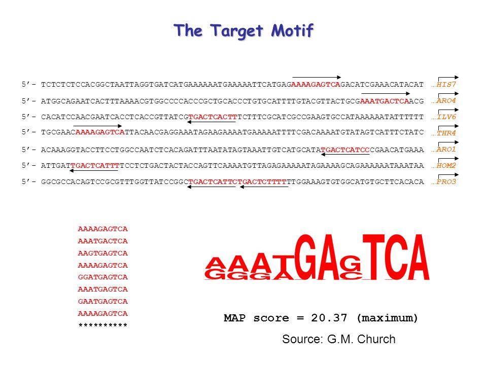 5'- TCTCTCTCCACGGCTAATTAGGTGATCATGAAAAAATGAAAAATTCATGAGAAAAGAGTCAGACATCGAAACATACAT 5'- ATGGCAGAATCACTTTAAAACGTGGCCCCACCCGCTGCACCCTGTGCATTTTGTACGTTACTGCGAAATGACTCAACG 5'- CACATCCAACGAATCACCTCACCGTTATCGTGACTCACTTTCTTTCGCATCGCCGAAGTGCCATAAAAAATATTTTTT 5'- TGCGAACAAAAGAGTCATTACAACGAGGAAATAGAAGAAAATGAAAAATTTTCGACAAAATGTATAGTCATTTCTATC 5'- ACAAAGGTACCTTCCTGGCCAATCTCACAGATTTAATATAGTAAATTGTCATGCATATGACTCATCCCGAACATGAAA 5'- ATTGATTGACTCATTTTCCTCTGACTACTACCAGTTCAAAATGTTAGAGAAAAATAGAAAAGCAGAAAAAATAAATAA 5'- GGCGCCACAGTCCGCGTTTGGTTATCCGGCTGACTCATTCTGACTCTTTTTTGGAAAGTGTGGCATGTGCTTCACACA AAAAGAGTCA AAATGACTCA AAGTGAGTCA AAAAGAGTCA GGATGAGTCA AAATGAGTCA GAATGAGTCA AAAAGAGTCA ********** MAP score = 20.37 (maximum) …HIS7 …ARO4 …ILV6 …THR4 …ARO1 …HOM2 …PRO3 The Target Motif Source: G.M.