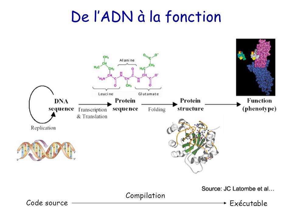 De l'ADN à la fonction Code source Exécutable Compilation