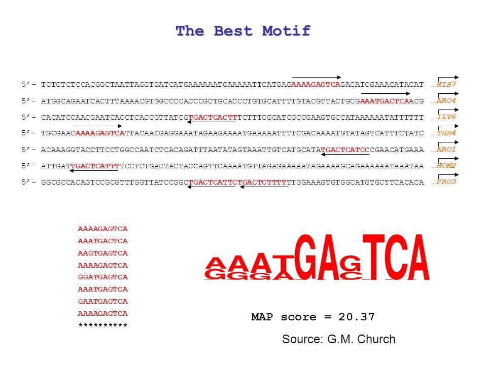 5'- TCTCTCTCCACGGCTAATTAGGTGATCATGAAAAAATGAAAAATTCATGAGAAAAGAGTCAGACATCGAAACATACAT 5'- ATGGCAGAATCACTTTAAAACGTGGCCCCACCCGCTGCACCCTGTGCATTTTGTACGTTACTGCGAAATGACTCAACG 5'- CACATCCAACGAATCACCTCACCGTTATCGTGACTCACTTTCTTTCGCATCGCCGAAGTGCCATAAAAAATATTTTTT 5'- TGCGAACAAAAGAGTCATTACAACGAGGAAATAGAAGAAAATGAAAAATTTTCGACAAAATGTATAGTCATTTCTATC 5'- ACAAAGGTACCTTCCTGGCCAATCTCACAGATTTAATATAGTAAATTGTCATGCATATGACTCATCCCGAACATGAAA 5'- ATTGATTGACTCATTTTCCTCTGACTACTACCAGTTCAAAATGTTAGAGAAAAATAGAAAAGCAGAAAAAATAAATAA 5'- GGCGCCACAGTCCGCGTTTGGTTATCCGGCTGACTCATTCTGACTCTTTTTTGGAAAGTGTGGCATGTGCTTCACACA AAAAGAGTCA AAATGACTCA AAGTGAGTCA AAAAGAGTCA GGATGAGTCA AAATGAGTCA GAATGAGTCA AAAAGAGTCA ********** MAP score = 20.37 …HIS7 …ARO4 …ILV6 …THR4 …ARO1 …HOM2 …PRO3 The Best Motif Source: G.M.