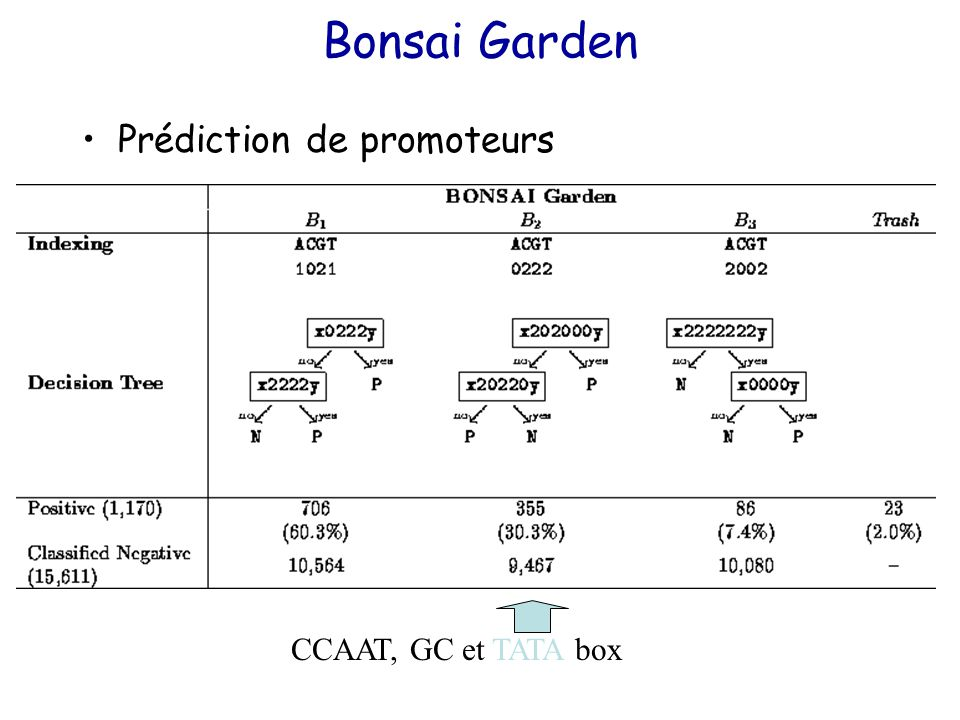 Bonsai Garden Prédiction de promoteurs CCAAT, GC et TATA box