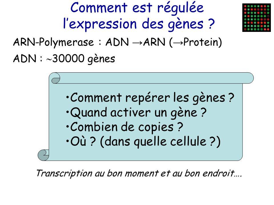 Comment est régulée l'expression des gènes .