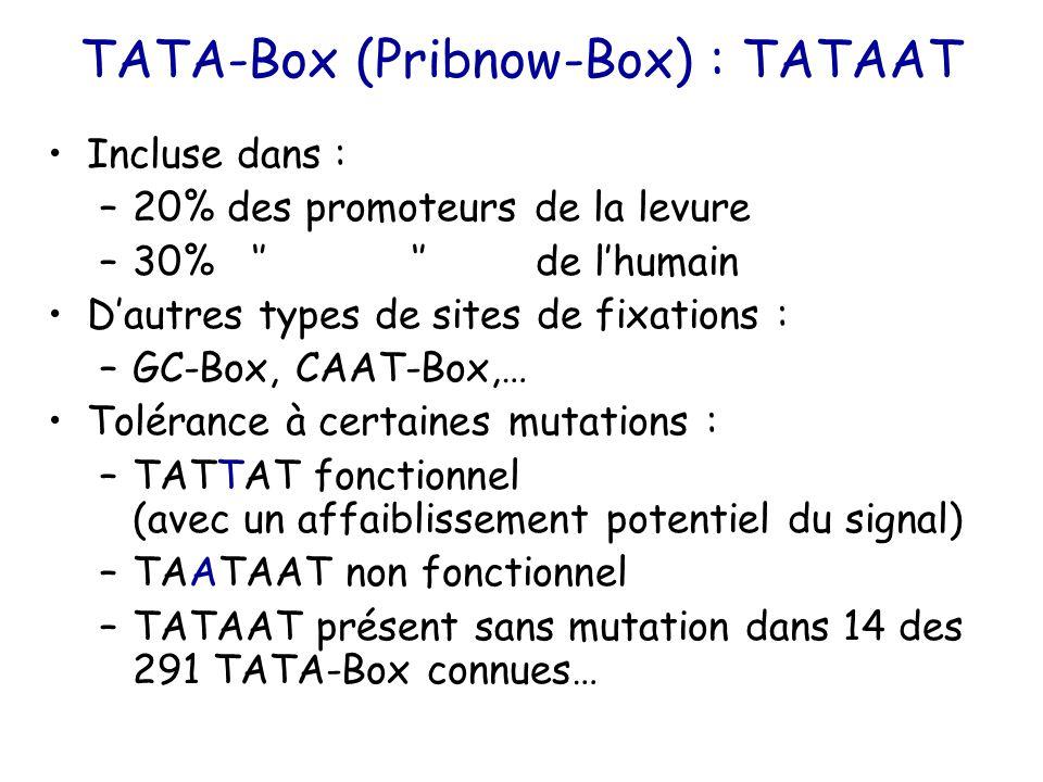 TATA-Box (Pribnow-Box) : TATAAT Incluse dans : –20% des promoteurs de la levure –30% '' '' de l'humain D'autres types de sites de fixations : –GC-Box, CAAT-Box,… Tolérance à certaines mutations : –TATTAT fonctionnel (avec un affaiblissement potentiel du signal) –TAATAAT non fonctionnel –TATAAT présent sans mutation dans 14 des 291 TATA-Box connues…