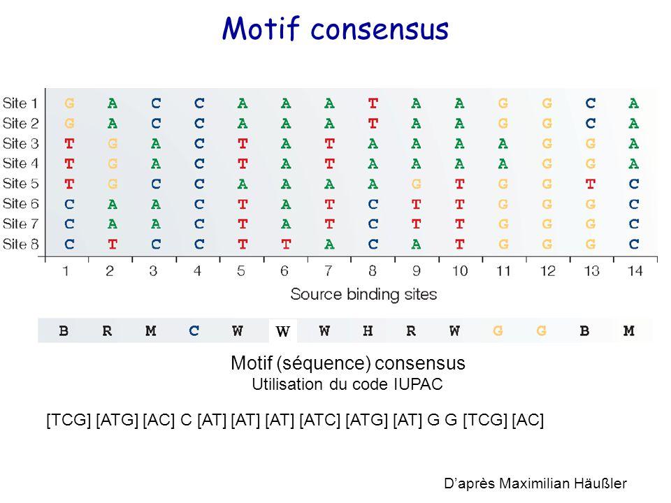 Motif consensus D'après Maximilian Häußler [TCG] [ATG] [AC] C [AT] [AT] [AT] [ATC] [ATG] [AT] G G [TCG] [AC] Motif (séquence) consensus Utilisation du code IUPAC W