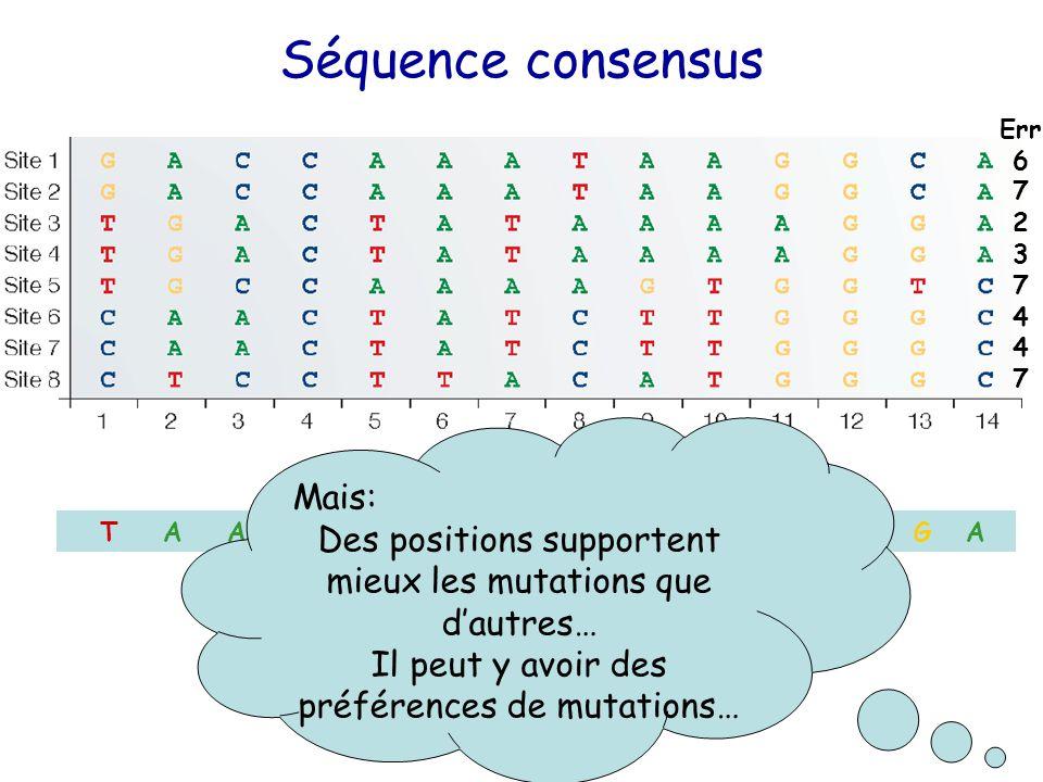 W Séquence consensus T A A C T A T A A T G G G A Mais: Des positions supportent mieux les mutations que d'autres… Il peut y avoir des préférences de mutations… Err 6 7 2 3 7 4 7