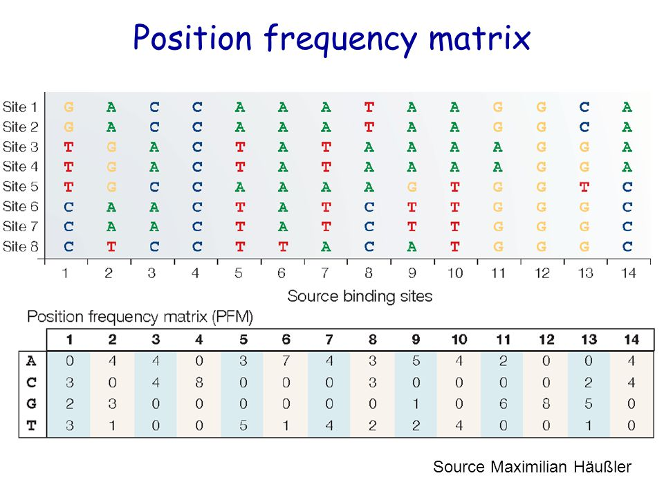 Position frequency matrix Source Maximilian Häußler