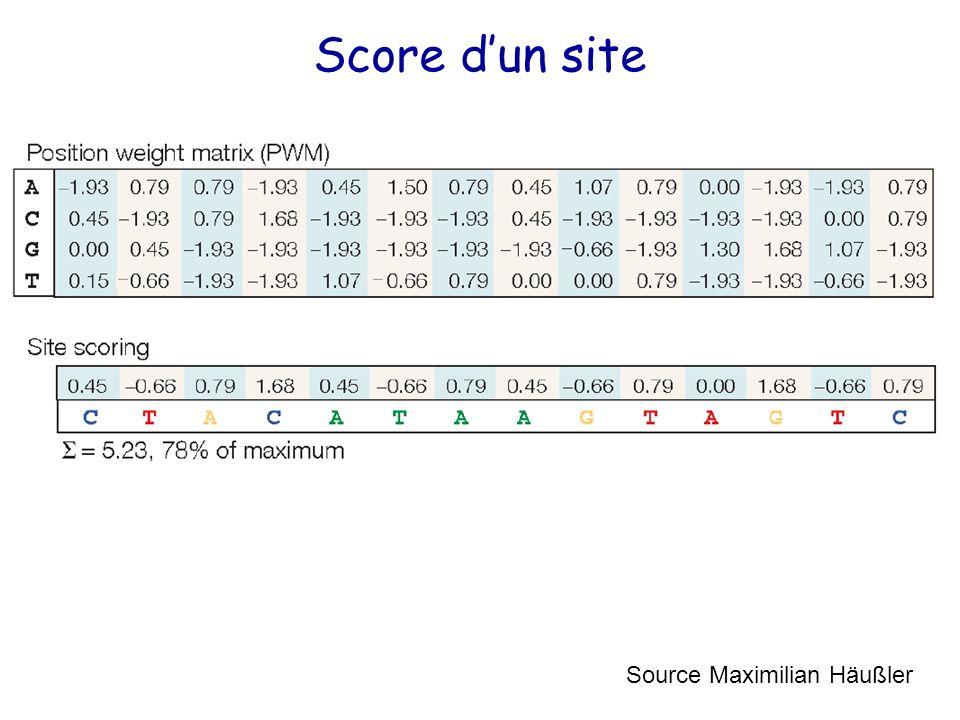 Score d'un site Source Maximilian Häußler