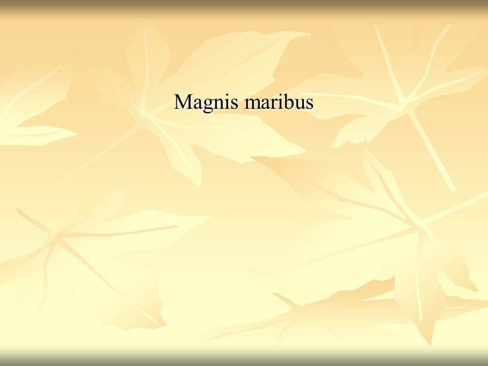 Magnis maribus