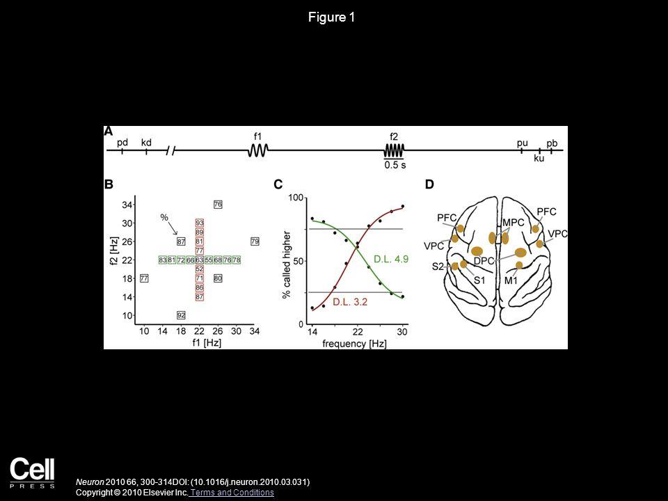 Figure 1 Neuron 2010 66, 300-314DOI: (10.1016/j.neuron.2010.03.031) Copyright © 2010 Elsevier Inc.