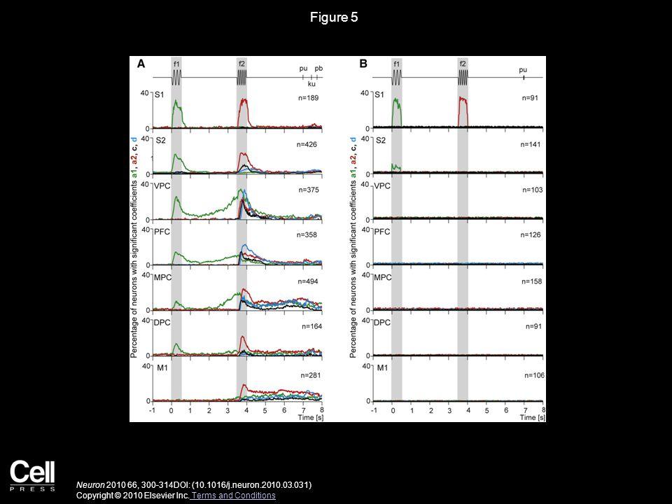 Figure 5 Neuron 2010 66, 300-314DOI: (10.1016/j.neuron.2010.03.031) Copyright © 2010 Elsevier Inc. Terms and Conditions Terms and Conditions