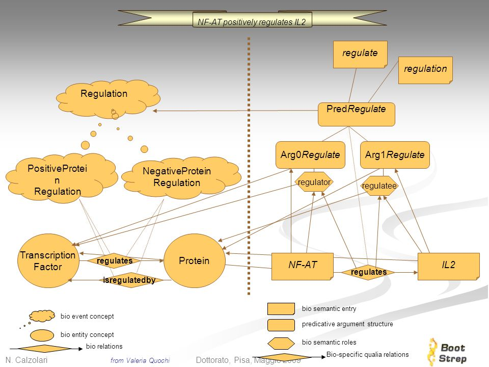 N. Calzolari 7 Dottorato, Pisa, Maggio 2009 Regulation PositiveProtei n Regulation NegativeProtein Regulation regulates Transcription Factor Protein i
