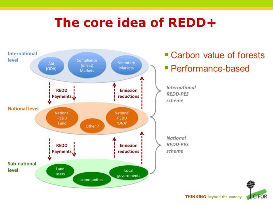 THINKING beyond the canopy The core idea of REDD+  Carbon value of forests  Performance-based