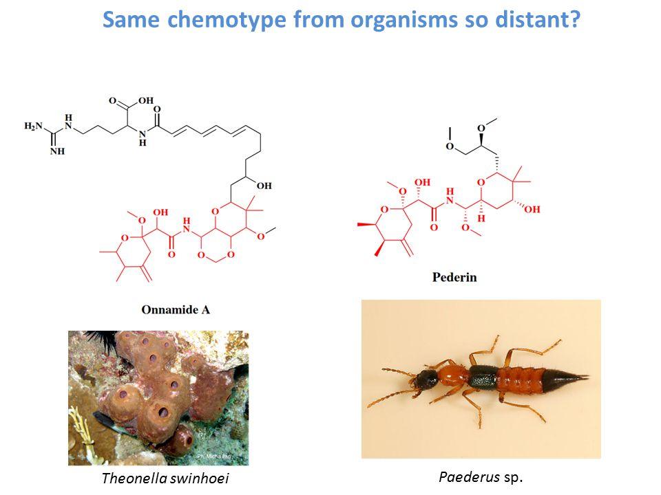 Same chemotype from organisms so distant Paederus sp. Theonella swinhoei