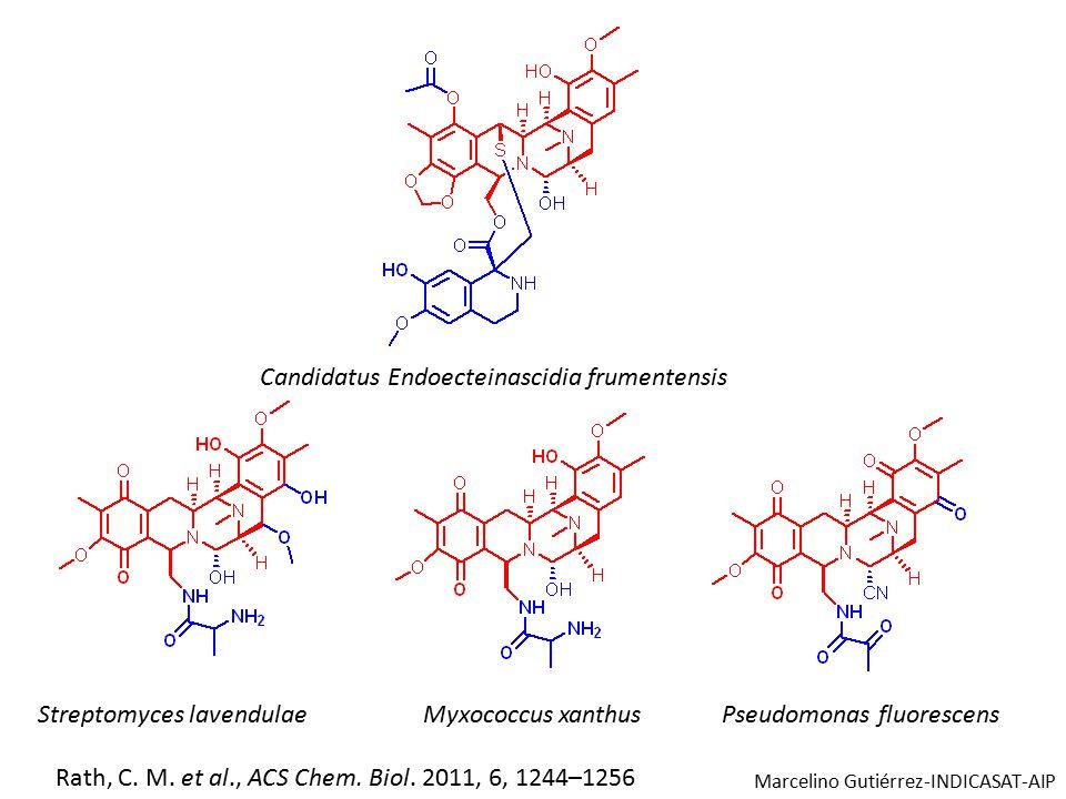 Streptomyces lavendulaeMyxococcus xanthusPseudomonas fluorescens Candidatus Endoecteinascidia frumentensis Rath, C.