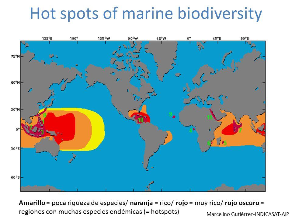 Hot spots of marine biodiversity Amarillo = poca riqueza de especies/ naranja = rico/ rojo = muy rico/ rojo oscuro = regiones con muchas especies endémicas (= hotspots) Marcelino Gutiérrez-INDICASAT-AIP