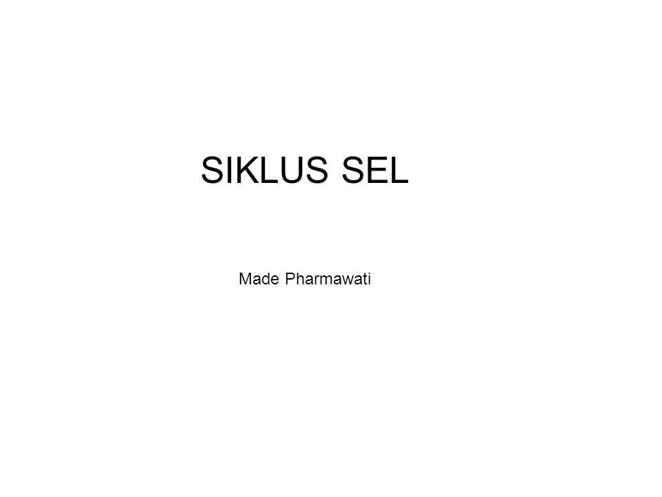 SIKLUS SEL Made Pharmawati